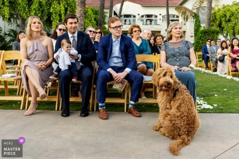 Park Hyatt Aviara Carlsbad, California wedding photograph of The bride and grooms dog watching them get married.