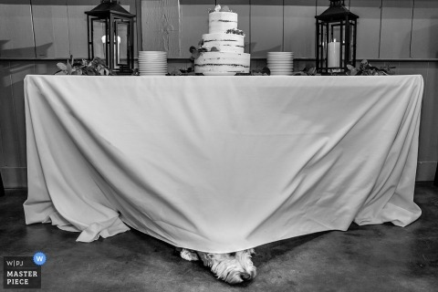 Bear Valley Lodge Wedding Reception Photography - Immagine del cane portatore dell'anello che fiuta torta