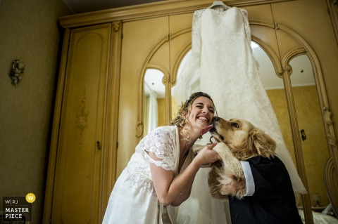 palmi- reggio calabria - photo of the dog's greeting to the bride