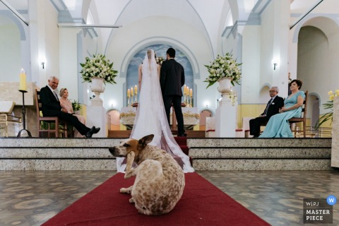 "São Paulo Church Wedding Photographer: ""Why did the dog come into the church? to see the wedding and give a scratch."""