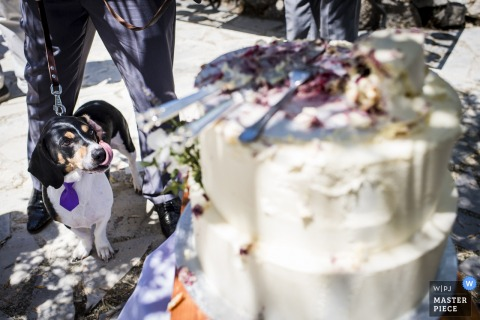 Cannes wedding photo of dog after the cutting of the wedding cake