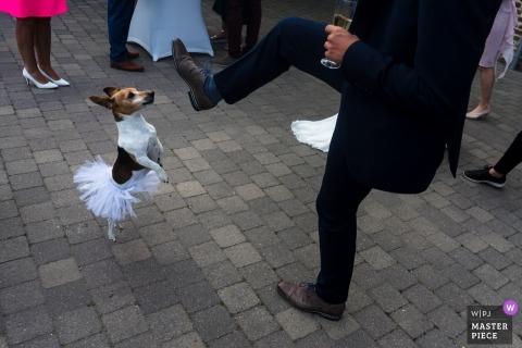 Honden op bruiloften - Trouwfoto's van Kasteel van Hoen