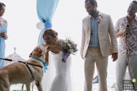 Victoria resort Hoi An image du lieu de mariage | Photographie de mariage à Hoi An lors de la cérémonie de la mariée embrassant son chien