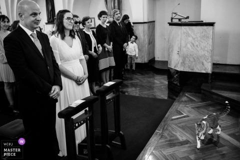 L'image de la cérémonie de Porto Portugal contient: Chat dans la cérémonie