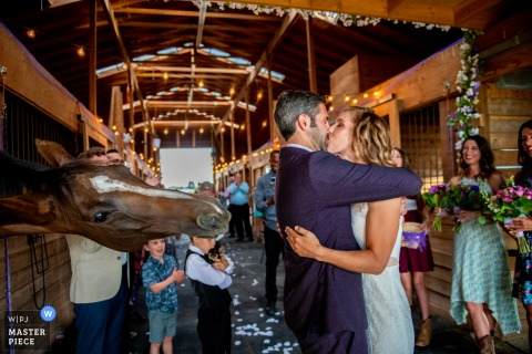 Small barn wedding photography from a Parker Colorado Ceremony of a horse wanting a kiss