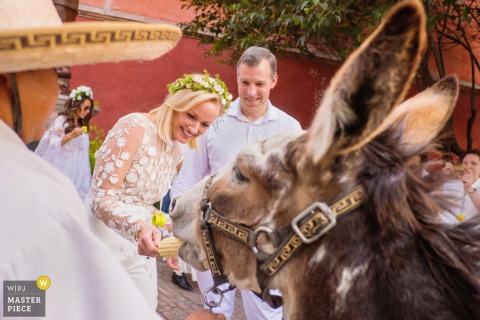 Mexico wedding photography of a couple in San Miguel de Allende Instituto, Guanajuato, Mexico feeding corn to a donkey during a Mexican wedding parade