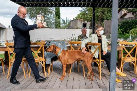 Imagen de boda de Montpellier de un perro de pie mientras un hombre camina con el pastel
