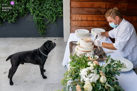 A dog is salivating in seeing the cake  on the wedding banquet table at a reception in Montpellier, France
