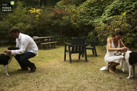 RI outdoor wedding photography from providence rhode island as the bride and groom are putting flowers on their dogs