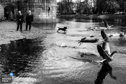 Un fotografo di matrimoni di East Riding of Yorkshire ha catturato questa immagine dalle strade di York, sulla strada per la cerimonia mentre lo sposo e il suo testimone si fermano in riva al fiume e sono ben augurati da alcuni astanti (fuori immagine) - sorridono, come un cane di passaggio
