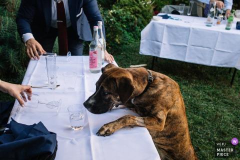 Il fotografo di matrimoni del Distretto di Columbia ha catturato questa immagine umoristica a All Souls Chuch Unitarian, Washington, DC del cane della coppia che rovina il tavolo degli innamorati