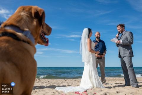 Foto della sposa e dello sposo che si sposano mentre un cane guarda durante una cerimonia sulla spiaggia a Gary, Indiana