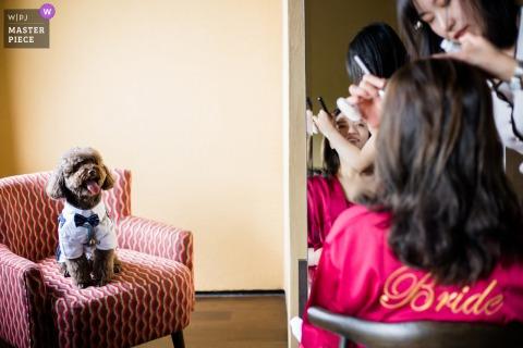 Fotografía de boda de Huzhou China del perro y la novia en preparación de maquillaje