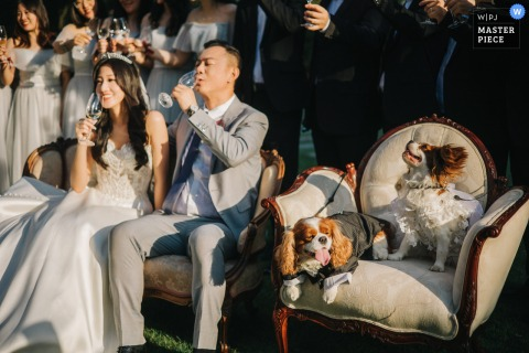 A top Jiangsu wedding photographer in Suzhou captured this picture ofthe The dogs at the wedding hotel ceremony