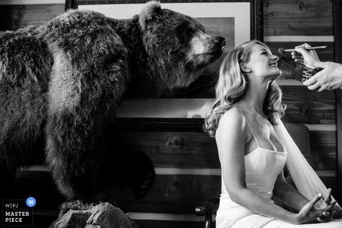 Belgrade, Montana marriage preparation time award-winning picture capturing the extra ordinary makeup and bear