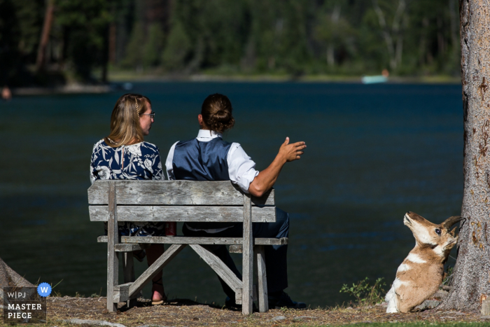 Detail photo of the bride and groom sitting on a bench in front of a lake next to a taxidermy deer head by a Missoula, MT wedding photographer.