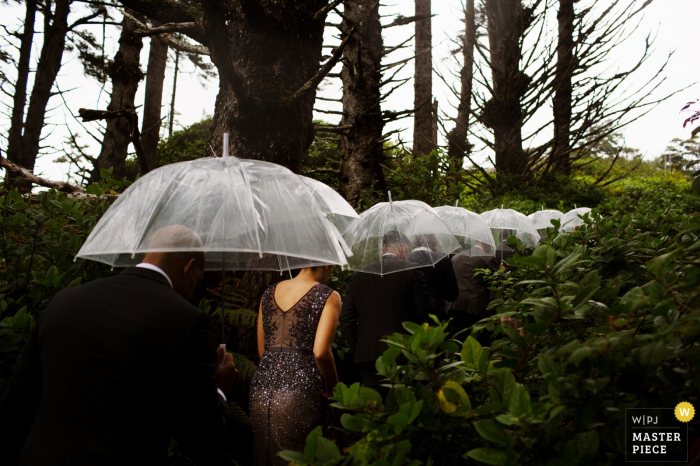 The bridal party proceeds through the greenery in the rain carrying clear umbrellas in this photo by a Victoria, British Columbia wedding photographer.