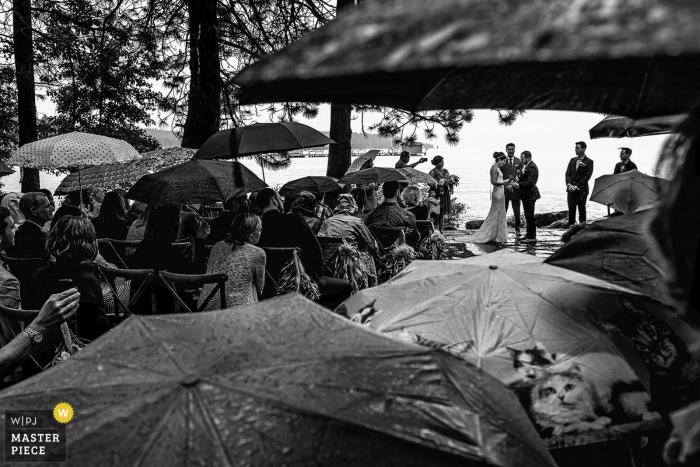 El fotógrafo de bodas de Lake Tahoe capturó esta imagen en blanco y negro de los invitados de bodas protegidos por el paraguas mientras la novia y el novio se casan en el aguacero