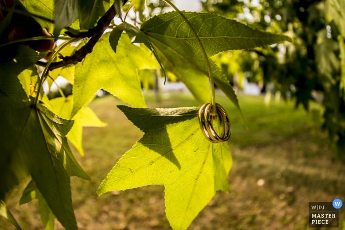 Lecco-huwelijksfotograaf ving deze foto van de bruid en de bruidegoms hangen van een bladtak terwijl de zon door de bomen schijnt