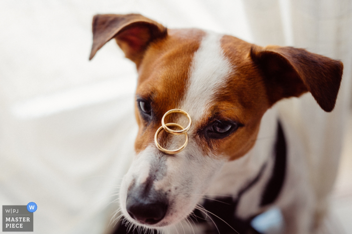 Sicily wedding photographer captured this image of the couples dog carefully balancing the wedding rings on his nose