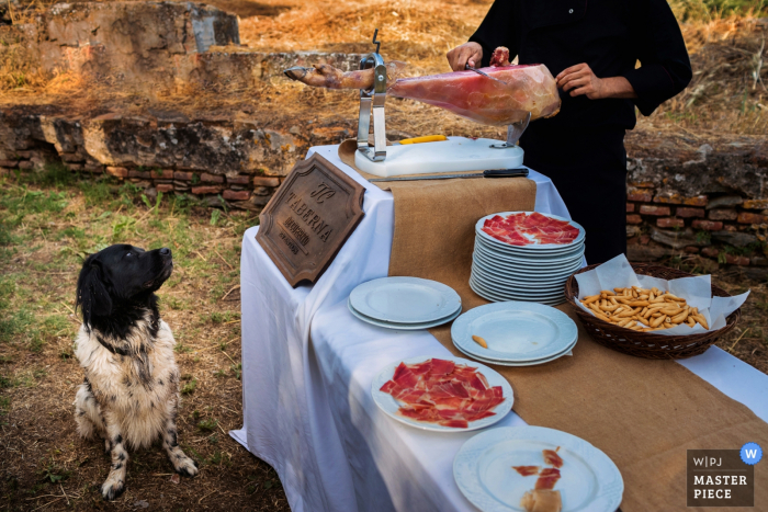 A dog watches as a man slices a Spanish ham to serve to guests in this photo by a Madrid, Spain wedding photographer.