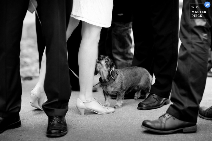 Lower Saxony wedding image of a dog with the guests and groomsmen