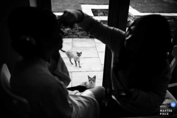 Greater Manchester Documentary Wedding Photographer | Image contains: cats, makeup, getting ready, black, white, door