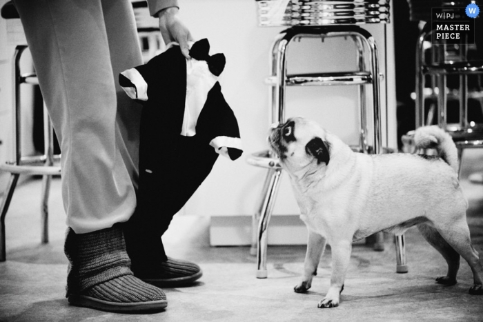 Brooklyn Wedding Photography   Image contains: dog, suit, getting ready, black, white