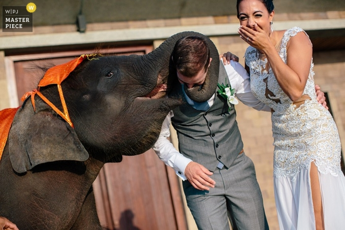 Phuket Documentary Wedding Photographer | Image contains: elephant, bride, groom, trunk, color, outdoors