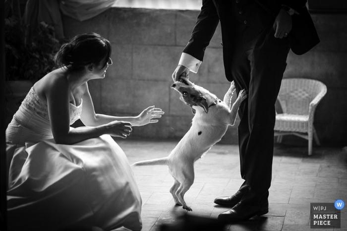 Arezzo Documentary Wedding Photographer | Image contains: bride, groom, black, white, dog, chair