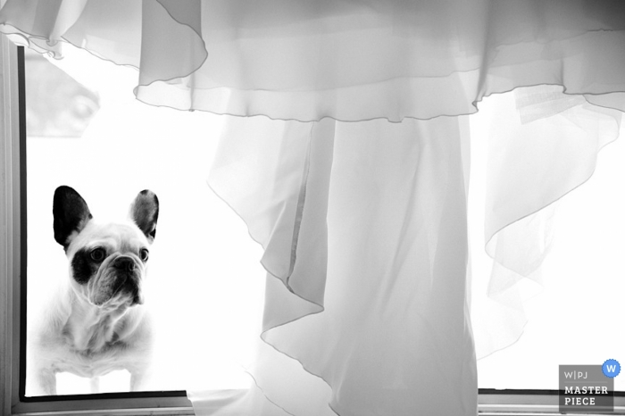 Cotes-d'Armor Wedding Photographer | Image contains: dog, dress, window, black, white, getting ready