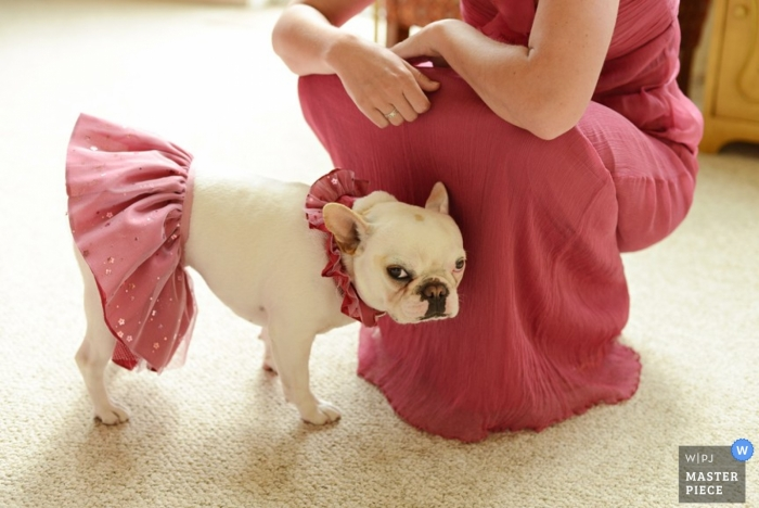 Outer Banks Wedding Photography | Image contains: getting ready, dog, color, bridesmaid, carpet