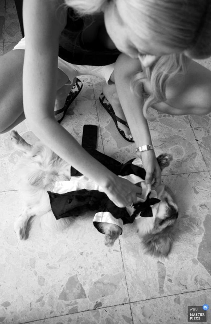 Santorini Wedding Photography | Image contains: dog, suit, tie, women, tile, getting ready, black, white