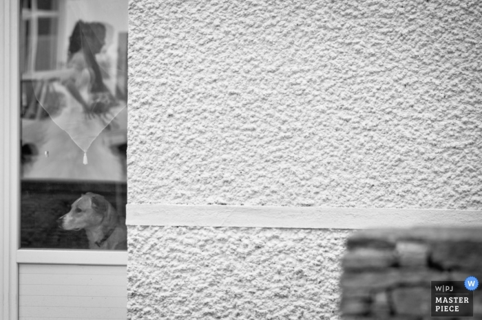 Landes Wedding Photography | Image contains: black, white, outdoor, reflection, door, bride, dog, wall