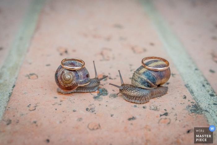 Milan wedding photography detail of rings on snails | capturing wedding details of rings