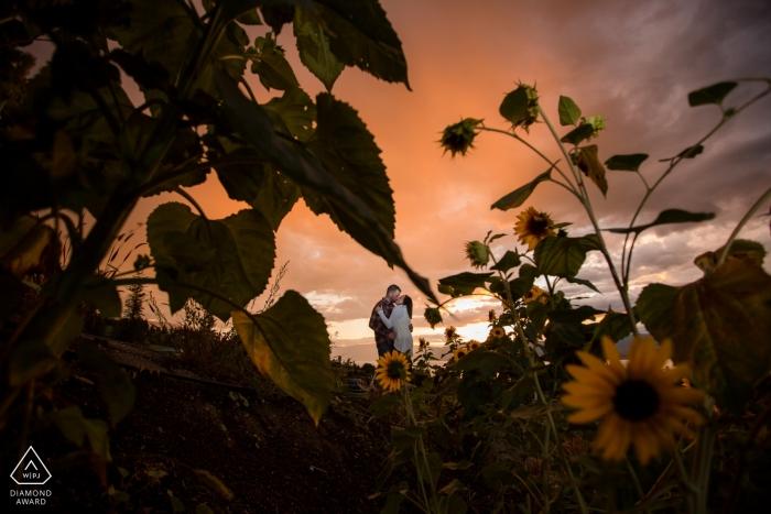 Zonnebloemovereenkomstbeelden van een paar bij zonsondergang | Kelowna fotograaf pre-huwelijkssessie