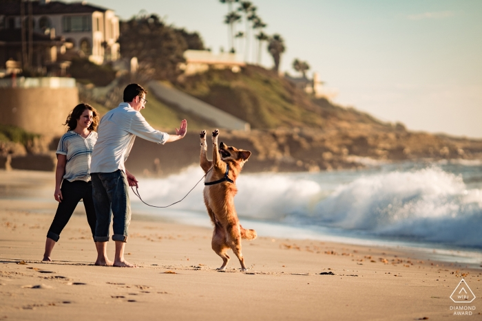 San Diego Engagement Photo Session - Image contains:dog, leash, beach, high-five, waves, crashing, sand