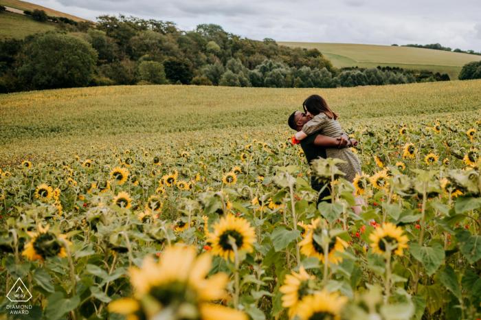 Champ de fleurs du soleil à l'extérieur de Hull, East Yorkshire tournage de fiançailles dans un champ de fleurs de soleil avec beaucoup d'amour et de plaisir