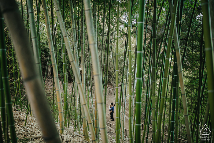 CA engagement photo shoot at the Hakone Garden, Saratoga, California - Image Shot through Bamboos at fans local garden