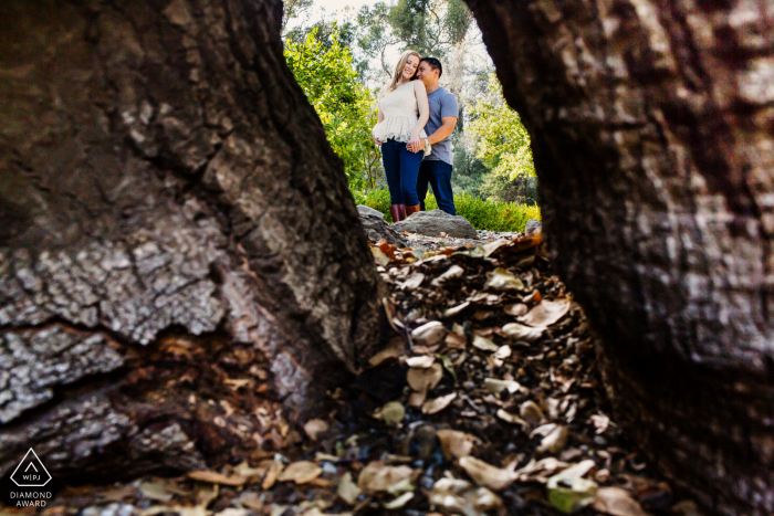 Saratoga engaged couple picture session with some Peeking through the giant tree trunks