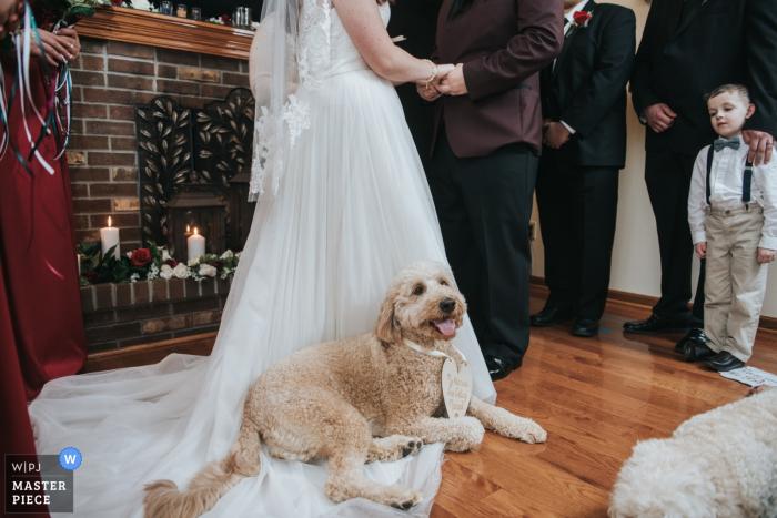 Zdjęcie psa siedzącego na sukni panny młodej podczas ceremonii