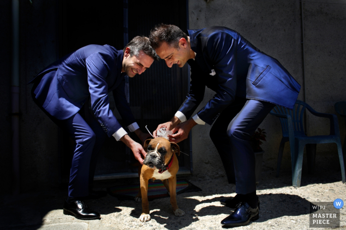 The ceremony dog is prepared by two groomsmen in Calabria