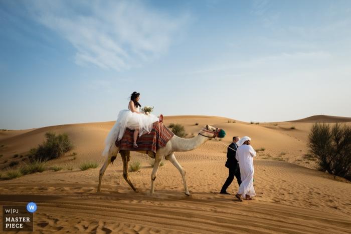 Wedding Photographer Dubai with a camel in the desert   Al Maha Desert Resort Dubai