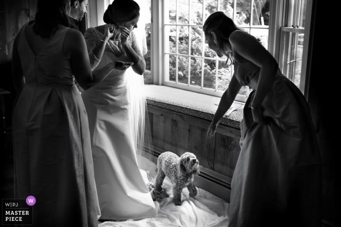 Dog, prep, earings, bridesmaids | Kennebunkport Maine bride getting ready