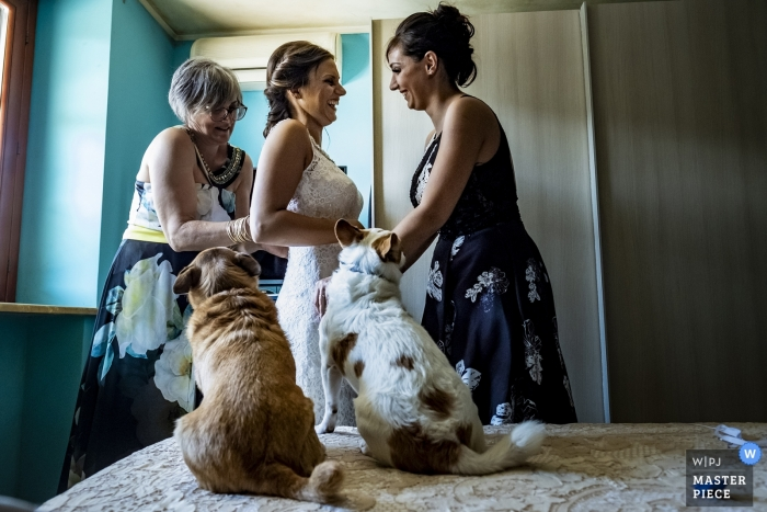 Reggio Calabria wedding photo of two dogs watching bride getting dressed  | wedding photography