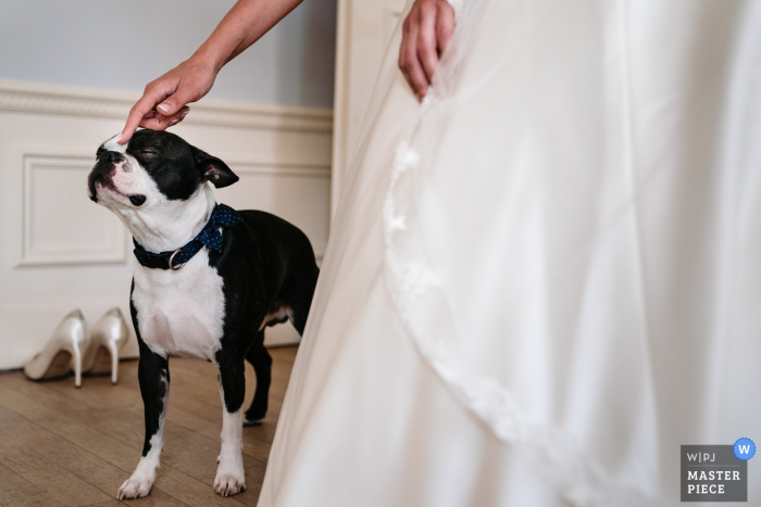 Wedding Photography at a Privately owned castle | Bride pets her bow-tied dog and he's enjoying it to the fullest