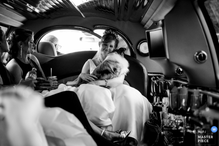 Montreal West United Church - Photo of the Bride in limo with dog on way to wedding in Montreal