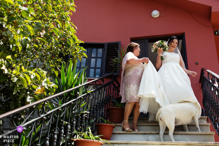 The dog peeks up the bride's dress before the ceremony at Vila de Lordelo in this award-winning photo composed by a documentary-style Braga, Portugal wedding photographer.