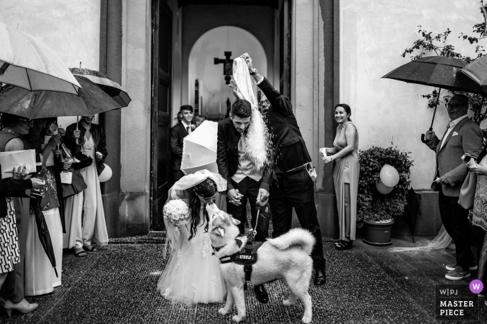 Bride and groom exiting the church as they are doused after the ceremony, Montespertoli