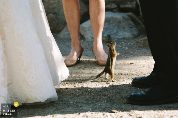 Ceremony interloper (chipmunk) during an elopement at Sapphire Point in Colorado. Outdoor Wedding Ceremony Photography.